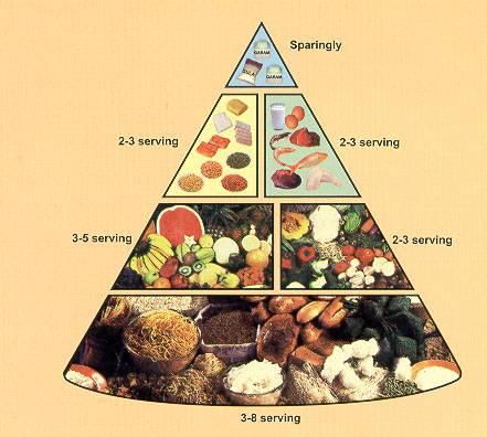 Kolom Pola Makan Sehat Dan Seimbang